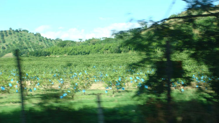 Drive to South America Photo. A lot of people are just as surprised as I was when I tell them that Colombia was by far the most beautiful country I've ever seen. Cartagena's old city center is a must for any traveler. And any drive on the Colombian highways elicit a magnificent scenery with pleasant foliage and calming rivers. Here, I'm passing through a beautiful plantation with vibrant colors, likes of which I had never seen before.