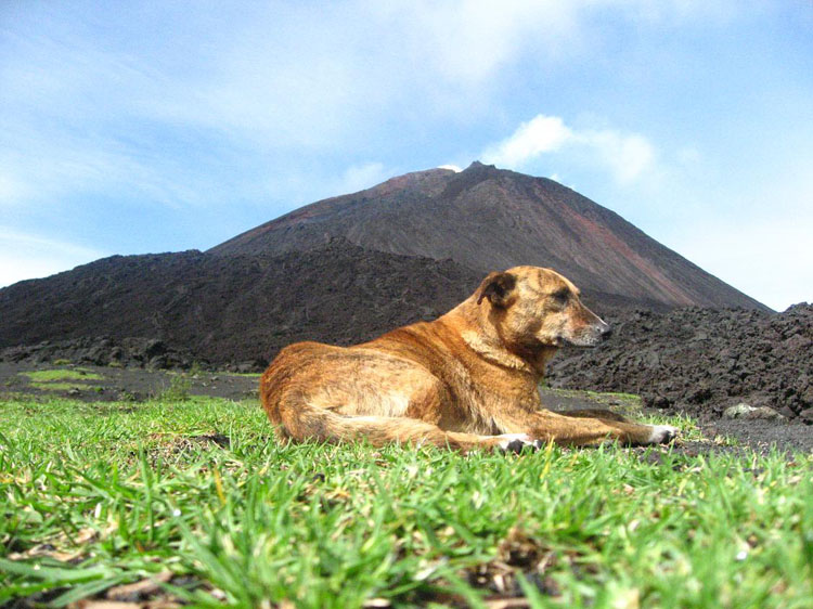 Drive to South America Photo. I thought this picture would draw a few 'awws' from a few people reading this blog but again, the entries started getting way too long. This was a stray dog that greeted us at the base of the volcano, Volcan Pacaya, Guatemala.